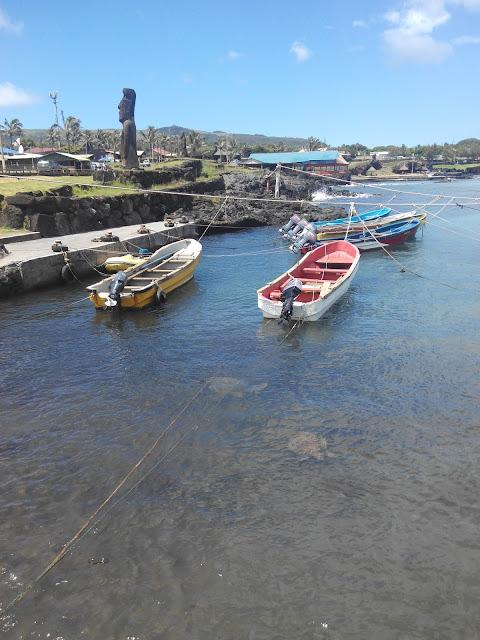 Tortugas en el Puerto de Hanga Roa, Isla de Pascua