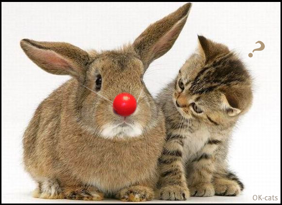 Photoshopped picture • Funny clown rabbit. Kittty is mesmerized by that weird red nose