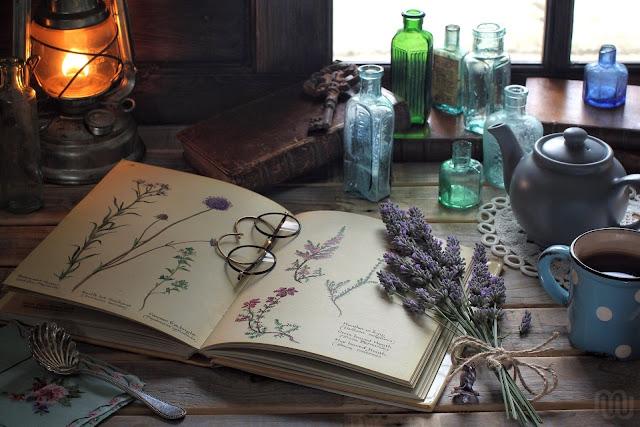 Как сделать гербарий