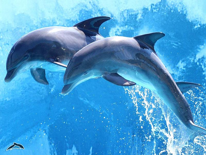 Totul despre delfinii de vedere,