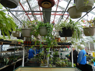 Sunnybrook Volunteer Association greenhouse hanging baskets by garden muses-not another Toronto gardening blog