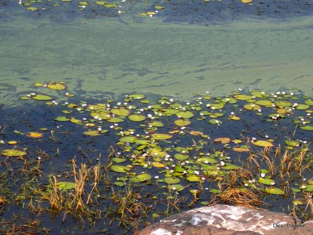 padam talao Ranthambore National Park
