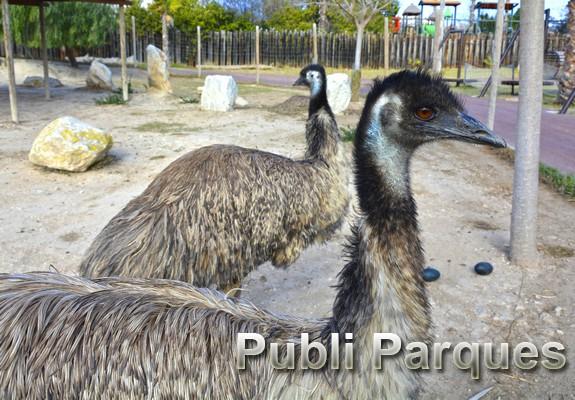 Pareja de emú