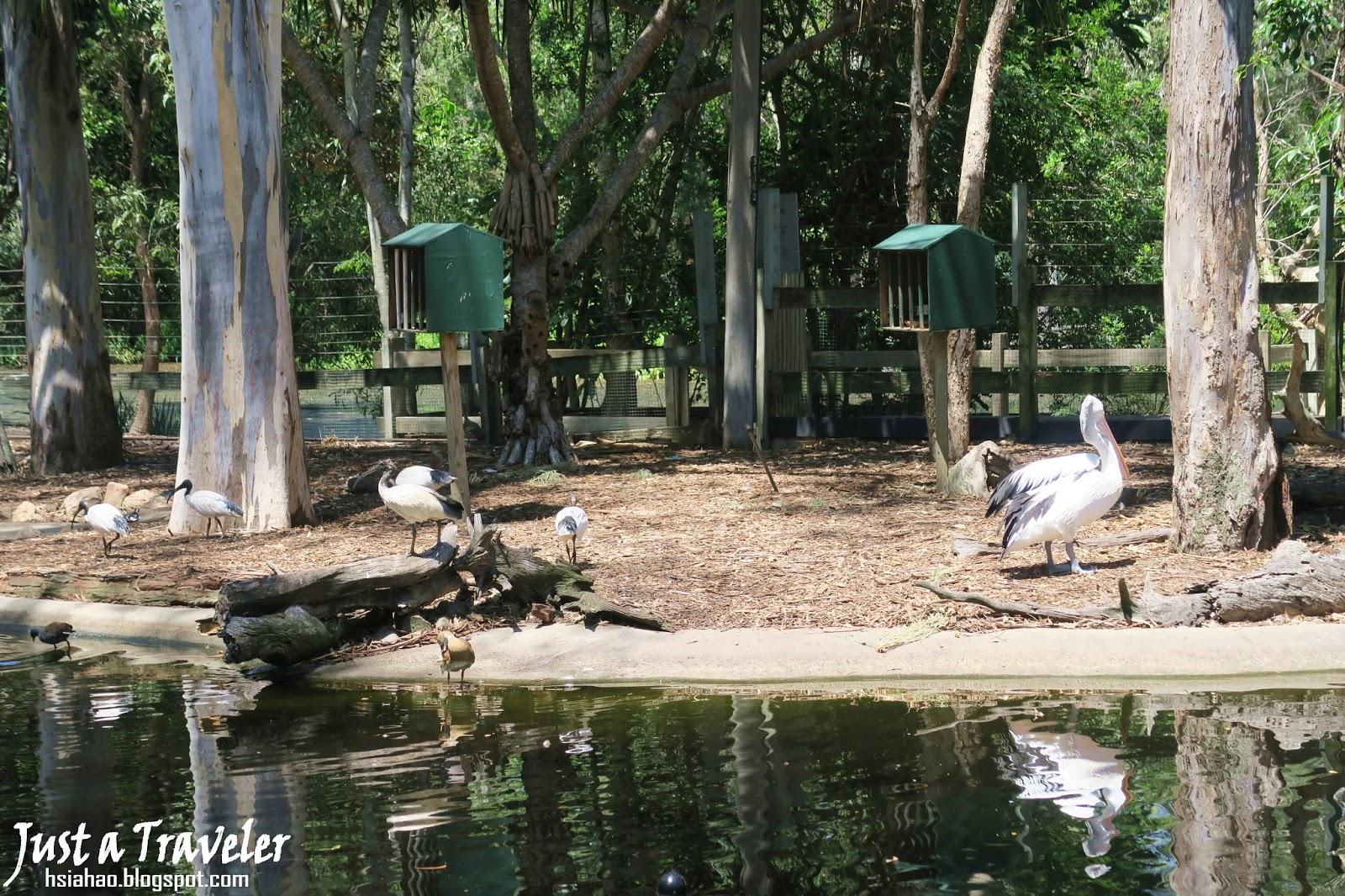 黃金海岸-景點-推薦-夢幻世界-Dream-World-動物園-套票-旅遊-自由行-澳洲-Gold-Coast-theme-park-Australia
