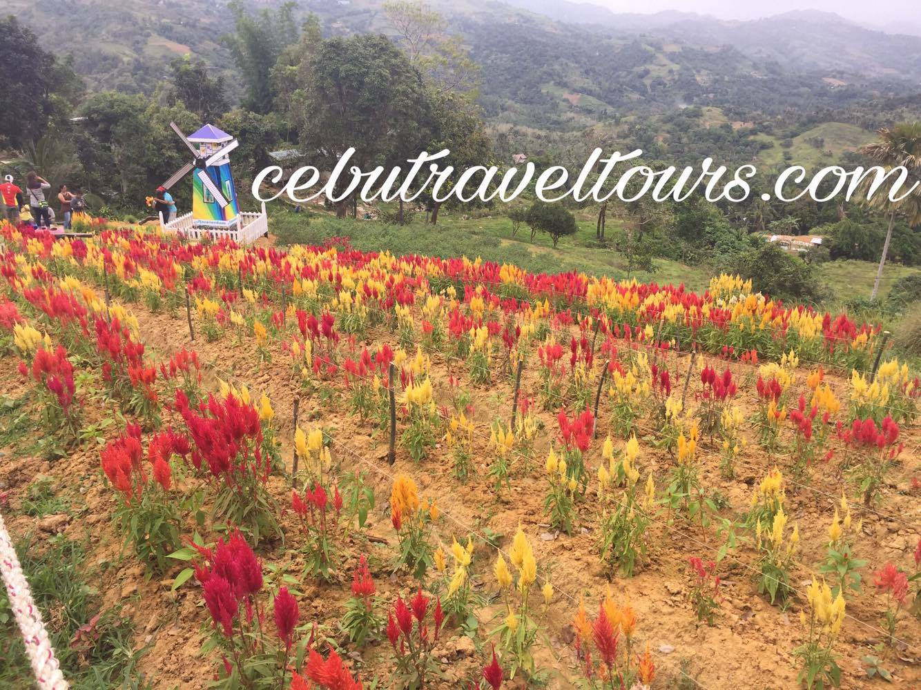 Cebu Travel Tour Guide And Car Rental Sirao Flower Garden In Busay Cebu City