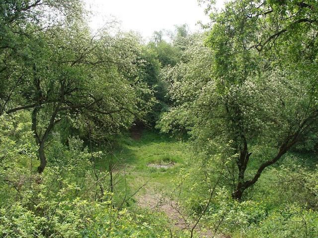 Wczesnośredniowieczne grodzisko pierścieniowate wklęsłe we wsi Trzek