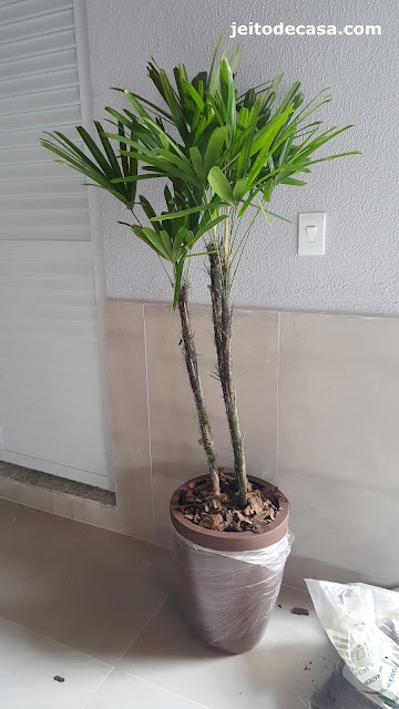plantas-para-interiores-palmeira-raphis