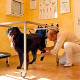 tratamento cães com lesão