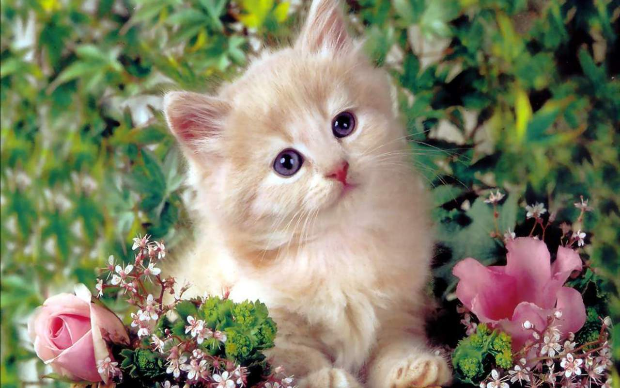 Redefining The Face Of Beauty : BEAUTIFUL KITTENS & CAT