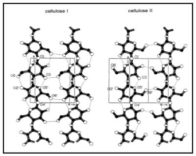 Ikatan Hidrogen Intra dan Antar Rantai Selulosa