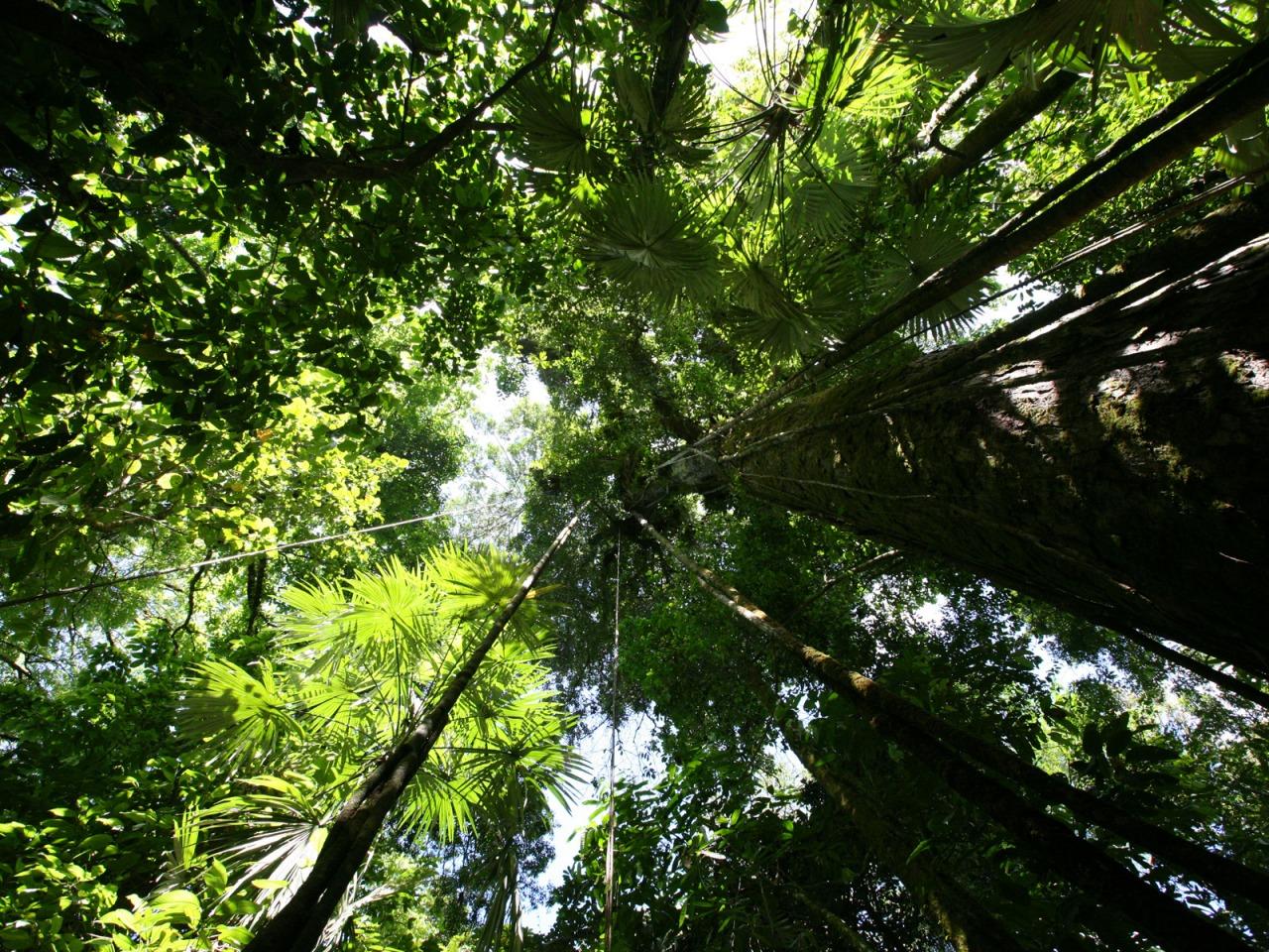 Kelsey Cooley Rainforest Hd