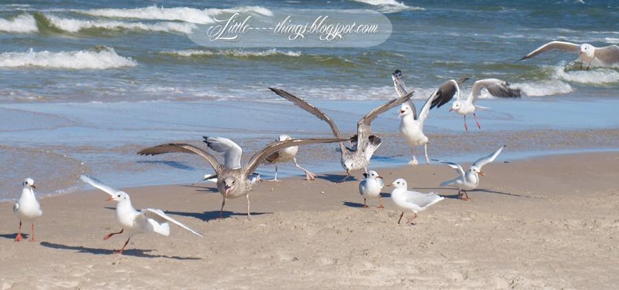 seagulls Poland