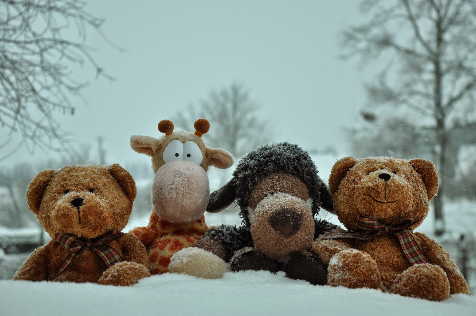 teddy-bear-posing-with-friends-winter-snow-4288x2848.jpg
