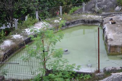 Sumber Air Panas Gunung Kapur Bogor