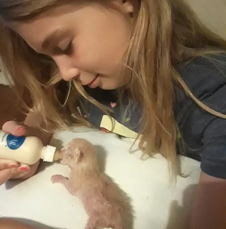 10-year-old girl  electrocuted after trying to rescue her kittens