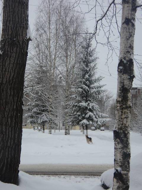 Одинокий пёс в парке