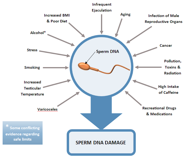 Penyebab Fregmentasi DNA Sperma