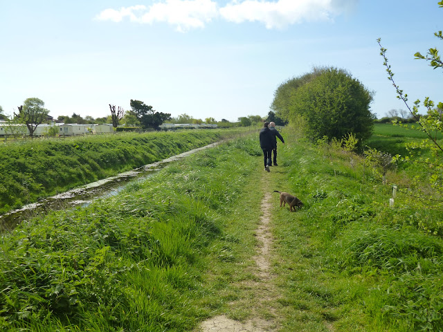 family and dog walking in the countryside