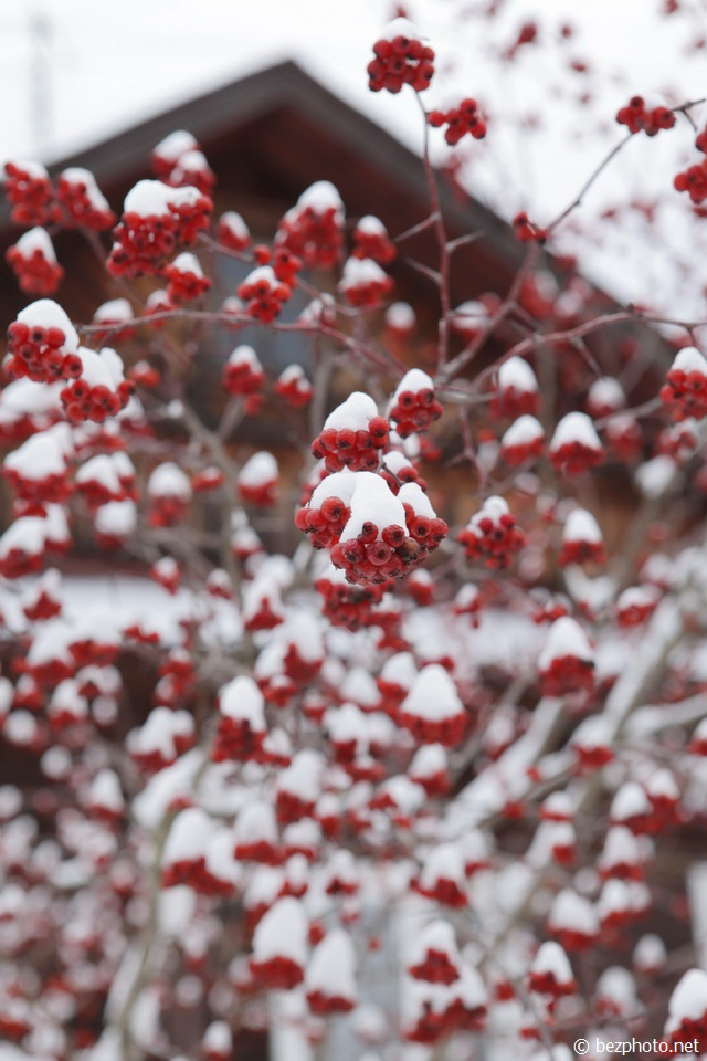 ягоды зимой фото