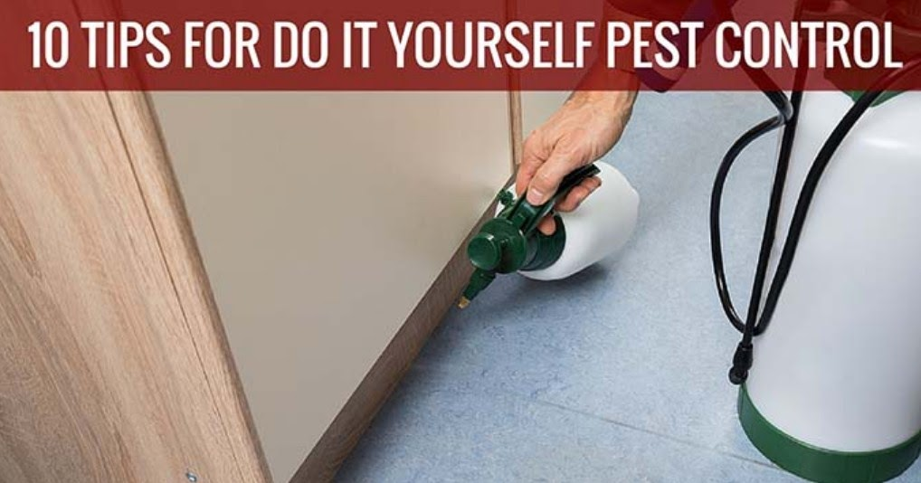 The 10 best tips for diy pest control pest control solutioingenieria Image collections