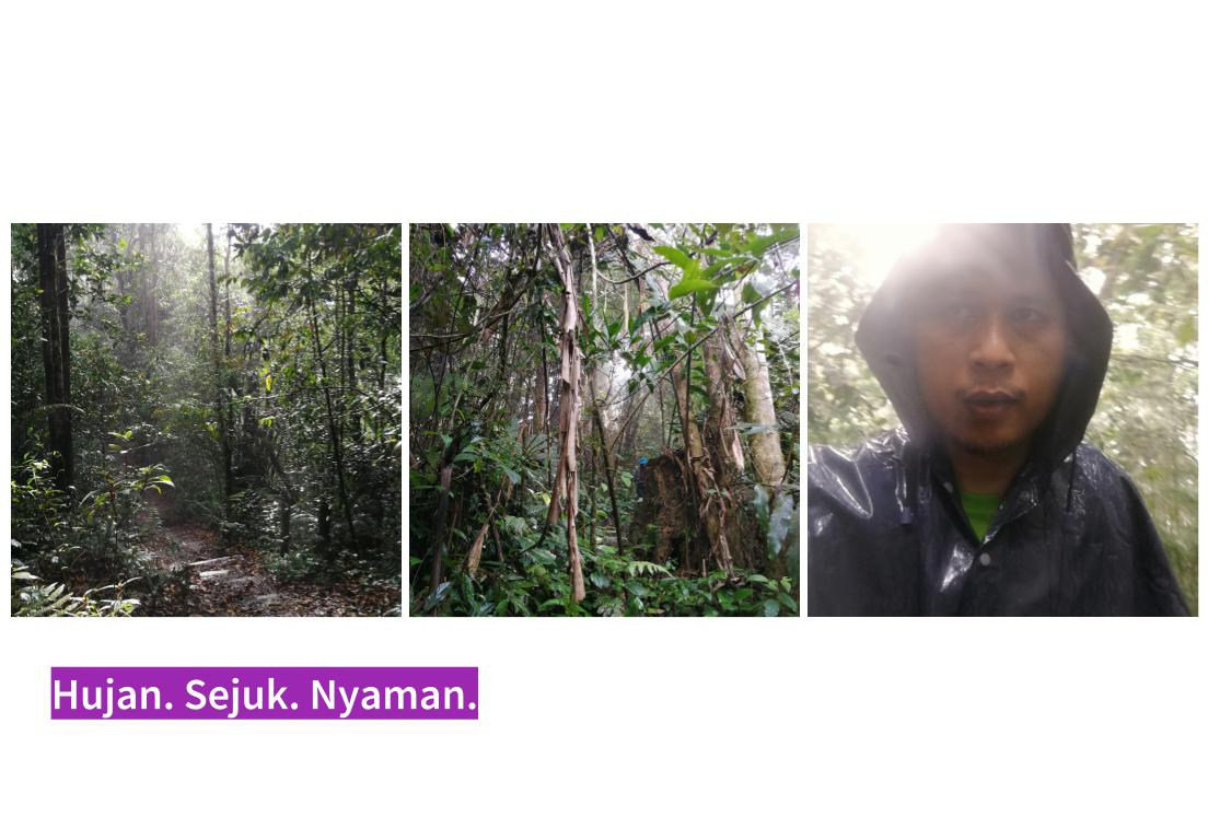 Trek Pine Tree Hill - pulang