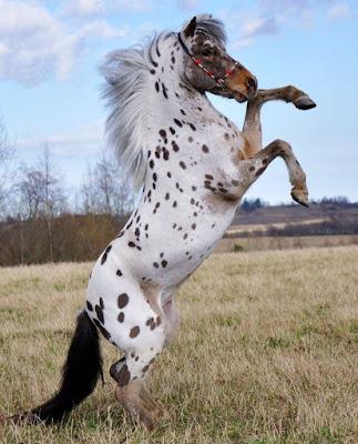 O cavalo teve, durante muito tempo, um papel importante no transporte; fosse como montaria, ou puxando uma carruagem, uma carroça, uma diligência, um bonde, etc.; também nos trabalhos agrícolas, como animal para a arar, etc. assim como comida.