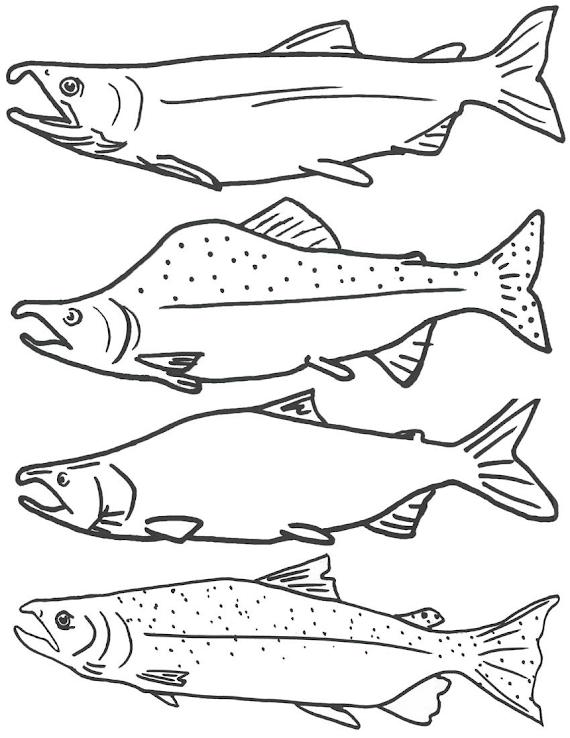 Aneka Gambar Ikan Hitam Putih Untuk Mewarnai