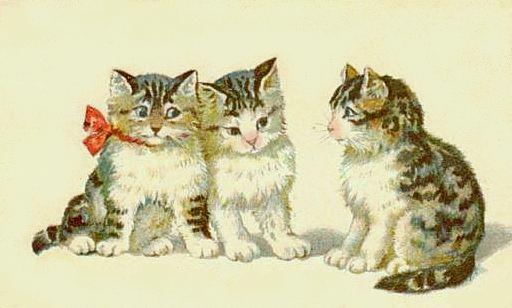 Bumble Button Very Cute Victorian Cat And Kitten Pictures