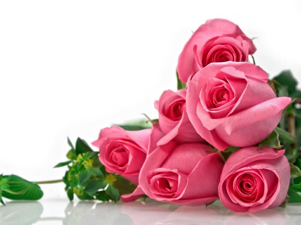Amit Name Wallpaper Hd Flowers For Flower Lovers Flowers Wallpapers Beautiful