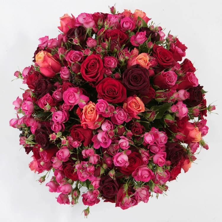 mix color roses wallpaper