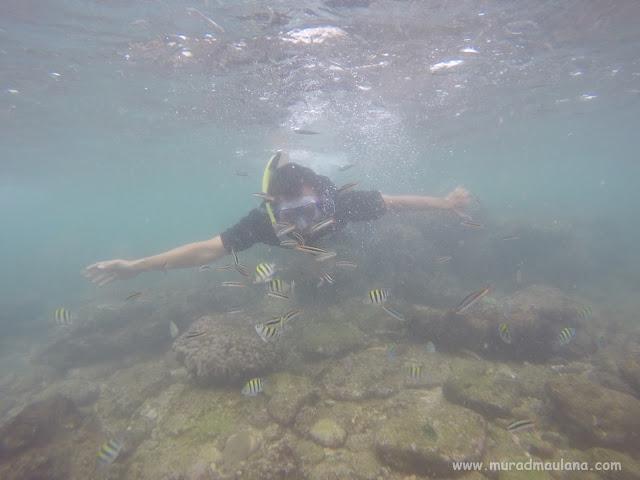 Saya Snorkeling di Pantai Nglambor 4