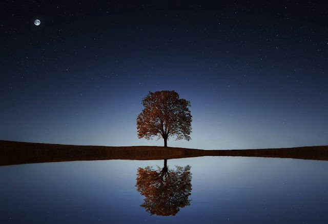 arvores famosas planeta terra ecologia ambiente de leitura carlos romero