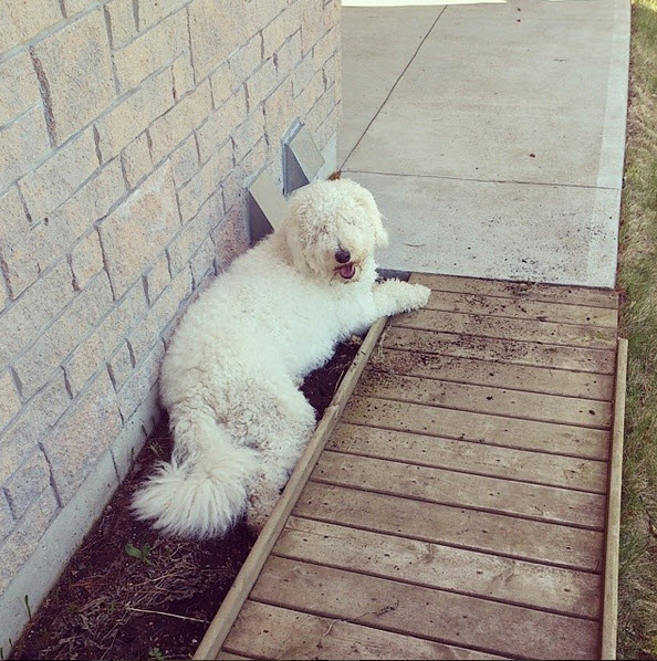 Why you should let dogs dig in the dirt in the summer!