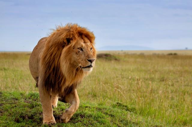 kisah seekor singa yang berdoa