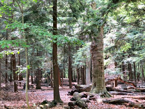 Cartier Park woods