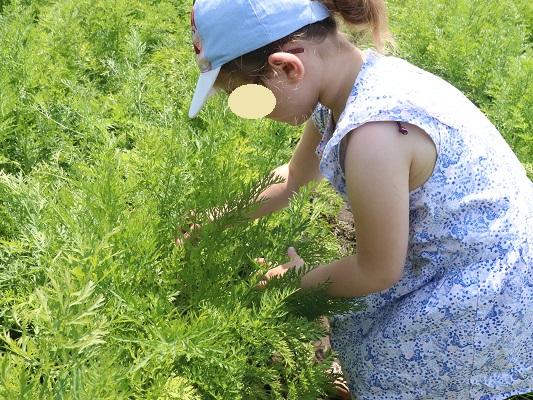 champs-carottes-blédina-bordeaux