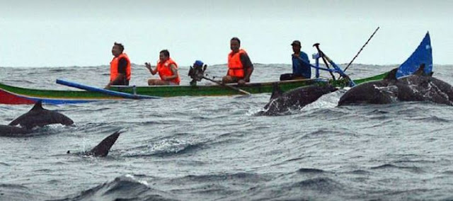 lumba-lumba di teluk kiluan lampung