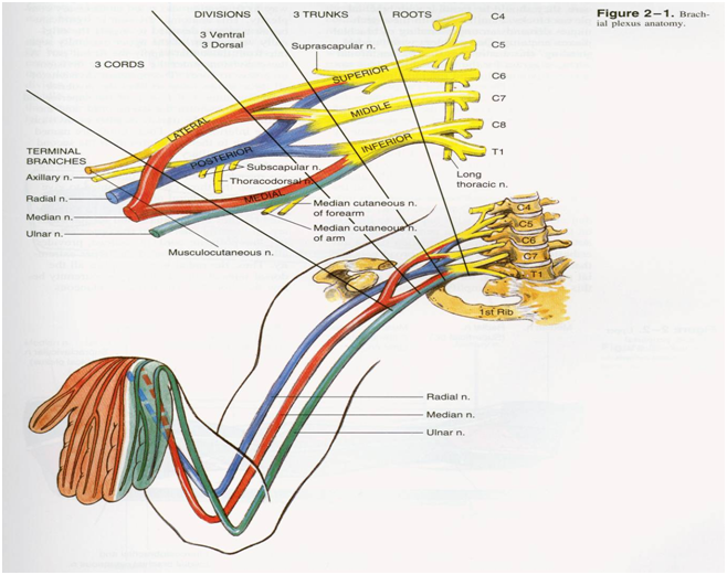 Regional Anesthesia Manual—upper extremity blocks ~ Dentistry and ...