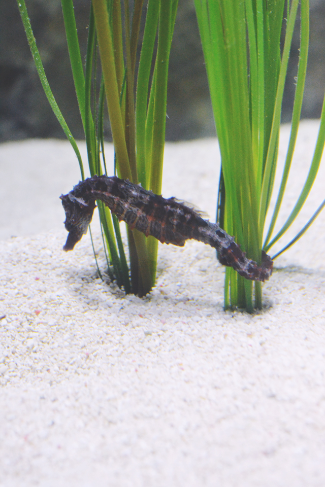 Seahorse and grass