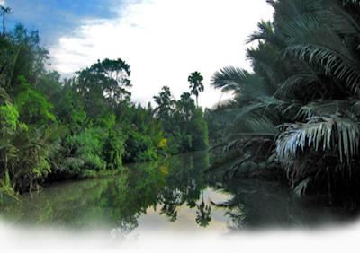 Taman Nasional Way Kambas Lampung Habitatnya Para Gajah