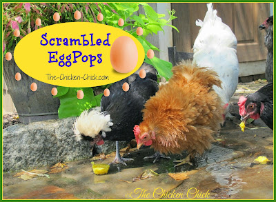 This recipe to help chickens beat the heat will earn you credit toward your master's degree from Crazy Chicken Lady University. If your friends and family are not yet convinced that you have lost your chicken-lovin' mind, making Scrambled EggPops will do the trick!