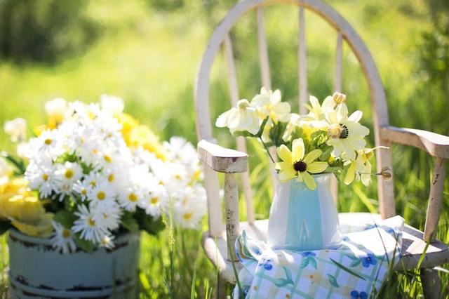 5 Tips Memilih Tanaman Hias yang Oke untuk Halaman Rumah