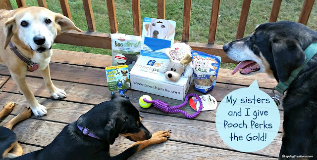 3 happy rescued dogs with a Pooch Perks box