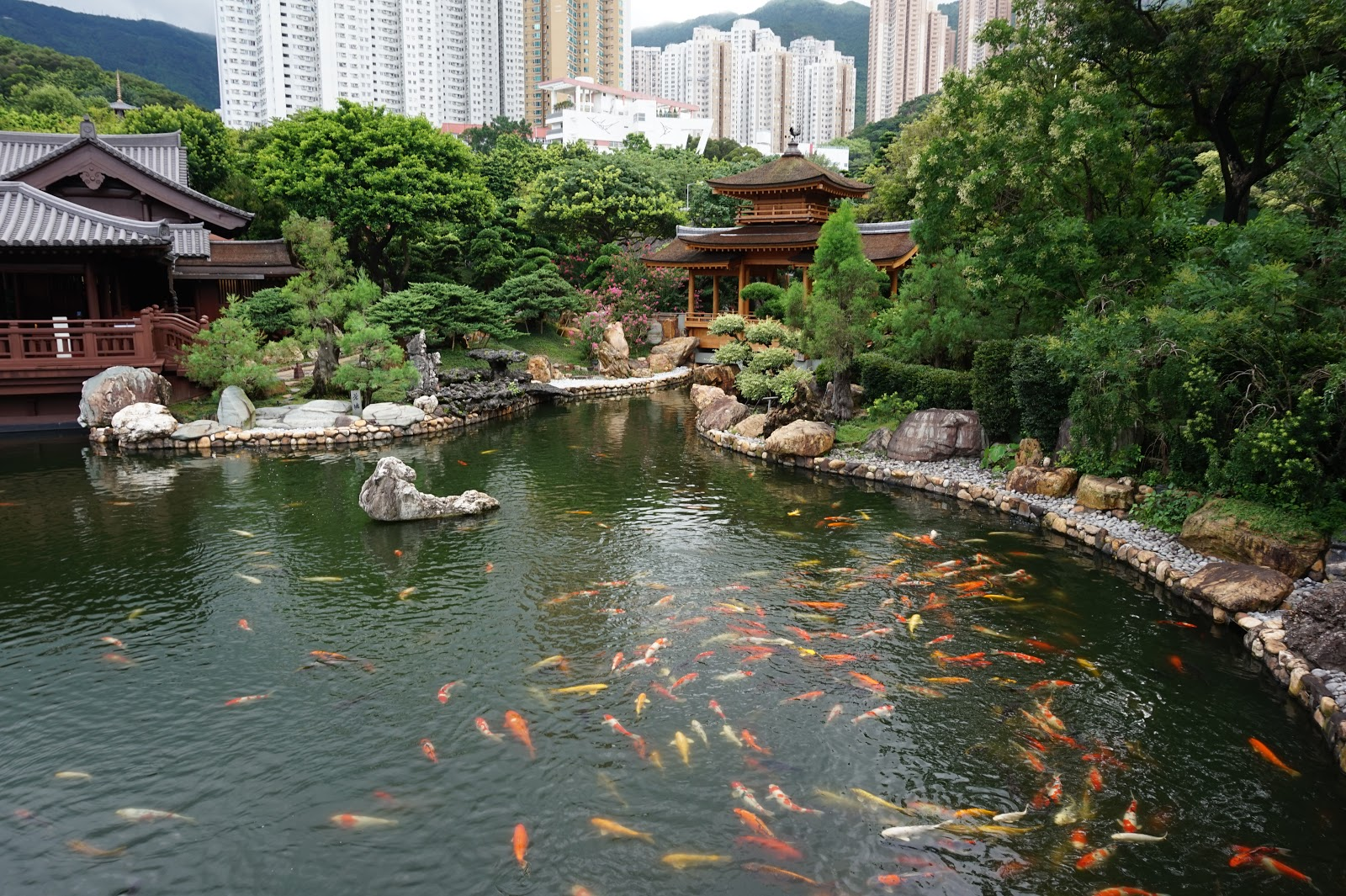 Koi in Hong Kong, Hong Kong Travel, Hong Kong Travel destination, Discover Hong Kong