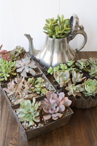 - Pot bunga succulent dari cetakan kue bekas dan teko bekas.