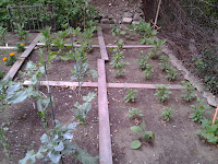 Square method gardening.