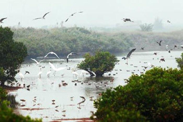 Khám phá vùng lõi khu dự trữ sinh quyển thế giới ở cửa sông Hồng -3