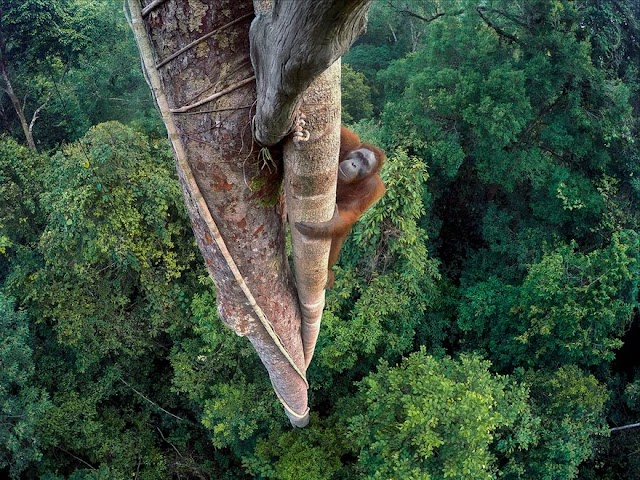 National Geographic announces Wildlife Photographer of the Year 2016