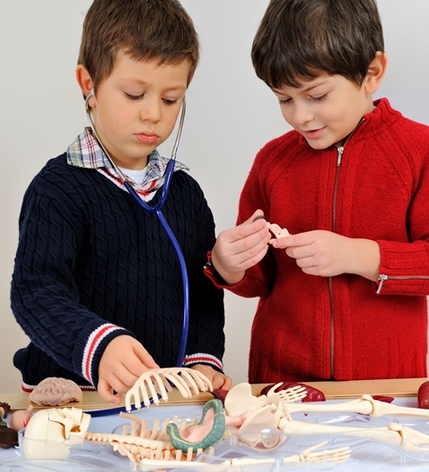 namc montessori lower elementary science skeletal system