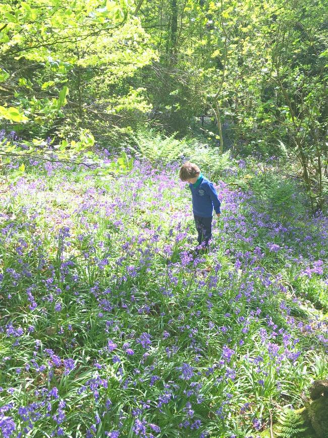 The-wenallt-cardiff-not-just-for-bluebells-image-of-boy-amongst-bluebells